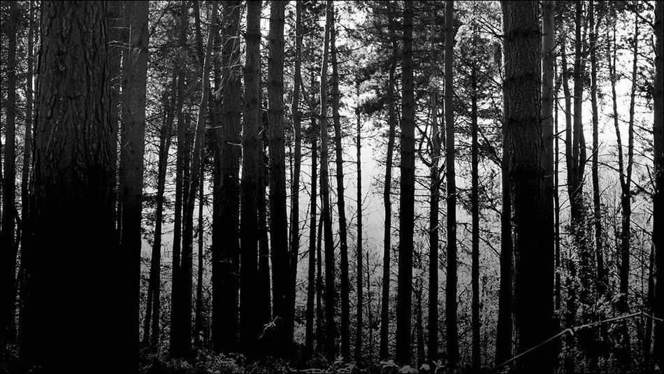 Bosques-Miedo