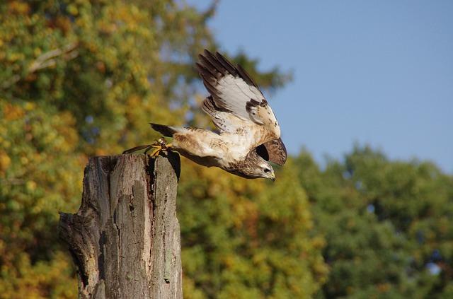 bird-63806_640
